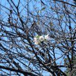 秋なのに桜が咲きました。 埼玉の公園墓地 庄和苑