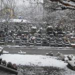 観測史上初の11月の積雪 埼玉の公園墓地 庄和苑