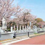 桜開花予想 埼玉県の公園墓地 庄和苑