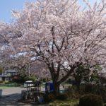 平成30年 桜満開 埼玉の公園墓地 庄和苑